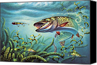 Perch Canvas Prints - Provoked Musky Canvas Print by JQ Licensing