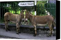 Burro Canvas Prints - Public Toilet Canvas Print by John Greim