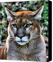 Mountain Lion Digital Art Canvas Prints - Puma Canvas Print by Kristin Elmquist