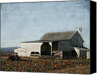 White Barn Canvas Prints - Pumpkin Farm Canvas Print by Kim Hojnacki