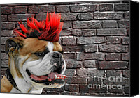 Hairstyle Photo Canvas Prints - Punk Bully Canvas Print by Christine Till