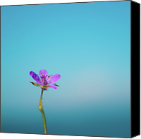 Provence Canvas Prints - Puple Flower Against Sea & Sky Blurred Background Canvas Print by Alexandre Fundone