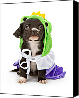 Animal Photo Canvas Prints - Puppy Frog Prince Canvas Print by Susan  Schmitz
