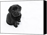 White Canvas Prints - Puppy in the Snow Canvas Print by Larry Marshall