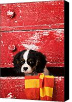 Dresser Canvas Prints - Puppy King Charles CavalierPuppy King Charles CavalierPuppy Ki Canvas Print by Garry Gay