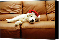 Indoors Canvas Prints - Puppy Wears A Christmas Hat, Lounges On Sofa Canvas Print by Karina Santos