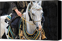 Arabians Canvas Prints - Pure Egyptian Canvas Print by Jan Amiss Photography