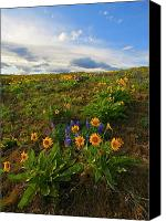 Meadows Canvas Prints - Purple and  Gold Canvas Print by Mike  Dawson