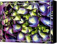 Father Christmas Canvas Prints - Purple and ivory hydrangeas Canvas Print by Rose Santuci-Sofranko
