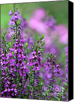 Florida Flowers Canvas Prints - Purple and Pink Flowers Canvas Print by Sabrina L Ryan