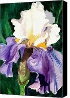 Garden Painting Canvas Prints - Purple and White Iris Canvas Print by Janis Grau