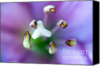 Micro Canvas Prints - Purple Botanical Canvas Print by Frank Tschakert