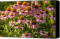 Botanic Canvas Prints - Purple Coneflower Canvas Print by Steve Gadomski