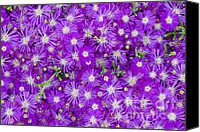 Flower Design Canvas Prints - Purple Flowers Canvas Print by Frank Tschakert