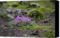 Tibetan Canvas Prints - Purple Flowers, Pine Cones And Moss Canvas Print by David Evans