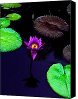 Purple Floral Canvas Prints - Purple Lily Canvas Print by Gary Dean Mercer Clark