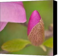 Jd Grimes Canvas Prints - Purple Magnolia Canvas Print by JD Grimes