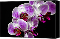 Floral Digital Art Special Promotions - Purple Orchids Canvas Print by Tom Bell