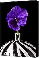 Vases Canvas Prints - Purple Pansy Canvas Print by Garry Gay