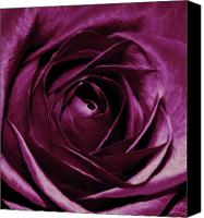 Floral Photo Canvas Prints - Purple Passion Canvas Print by Cathie Tyler