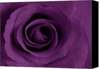 Rose Digital Art Canvas Prints - Purple Rose of Artsy Canvas Print by Leonard Rosenfield