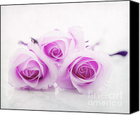 Purple Flowers Canvas Prints - Purple roses Canvas Print by Kristin Kreet