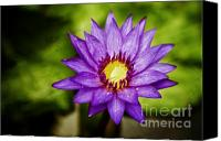 Lotus Pond Canvas Prints - Purple Sunrise Canvas Print by Scott Pellegrin