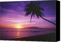 Tropical Sunset Canvas Prints - Purple Sunset and Palm Canvas Print by Ron Dahlquist - Printscapes