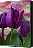 Purples Canvas Prints - Purple tulips Canvas Print by Garry Gay