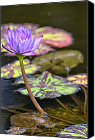 Lilly Pad Canvas Prints - Purple Water Lilly Canvas Print by Lauri Novak
