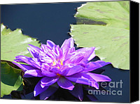 Violet Prints Photo Canvas Prints - Purple Waterlilie Flower Canvas Print by Chrisann Ellis