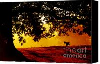 Family Farm Canvas Prints - Pygmy in Morning Light Canvas Print by Thomas R Fletcher