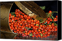 Phyllis Denton Canvas Prints - Pyracantha Berries Canvas Print by Phyllis Denton