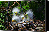 Florida Nature Photography Canvas Prints - Quadruplets Canvas Print by Barbara Bowen