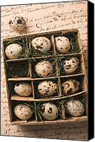 Quail Canvas Prints - Quail Eggs In Box Canvas Print by Garry Gay