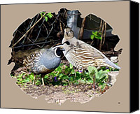 Quail Canvas Prints - Quail Mates Canvas Print by Will Borden