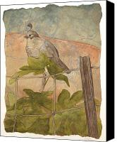 Fig Bird Canvas Prints - Quail on Fig Canvas Print by Sara Bell