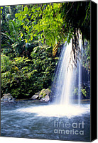Lush Vegetation Canvas Prints - Quebrada Juan Diego Waterfall Canvas Print by Thomas R Fletcher