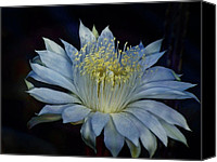 Cereus Canvas Prints - Queen of the Night  Canvas Print by Saija  Lehtonen