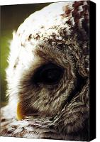 Barred Owl Canvas Prints - Quiet Moment Canvas Print by Larysa Luciw