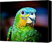 Parrot Canvas Prints - Quinny Canvas Print by Laura M. Vear