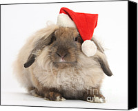 Father Christmas Canvas Prints - Rabbit Wearing Christmas Hat Canvas Print by Mark Taylor