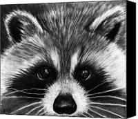 Raccoon Drawings Canvas Prints - Raccoon Canvas Print by Alycia Ryan