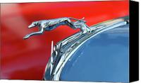 Greyhound Canvas Prints - Racer Canvas Print by Rebecca Cozart