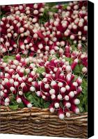 Vegetables Canvas Prints - Radishes in a basket Canvas Print by Jane Rix