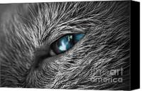 Selective Color Canvas Prints - Raging Blue Canvas Print by Yhun Suarez