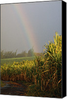 Cane Canvas Prints - Rainbow Arching Into Field Behind Stream Canvas Print by Stockbyte