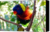 Tropical Bird Art Canvas Prints - Rainbow in the trees Canvas Print by David Lee Thompson