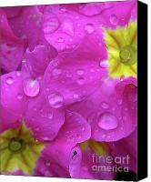 Beautiful Pink Flowers Canvas Prints - Raindrops on Pink Flowers Canvas Print by Carol Groenen