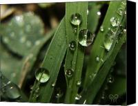 Raining Canvas Prints - Raindrops on the Grass Canvas Print by Karen Musick